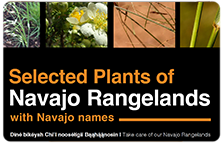 Close up of four different types of plants that grow in the Navajo Rangelands with title of below the plants.