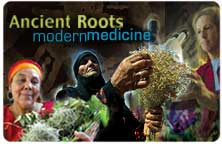 Title slide for Ancient Roots: Modern Medicine