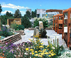 Image of xeriscaped garden
