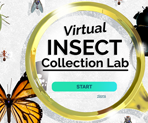 Virtual Insect Collection opening screen with magnifying glass and insects
