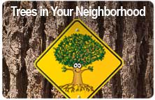 "Icon for ""Trees In Your Neighborhood"" produced by NMSU Media Productions"